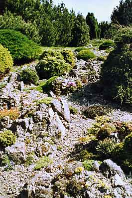 Skalka v Bořanovicích